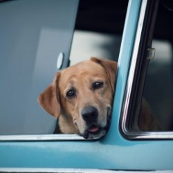 Don't leave  your pet in a parked car!