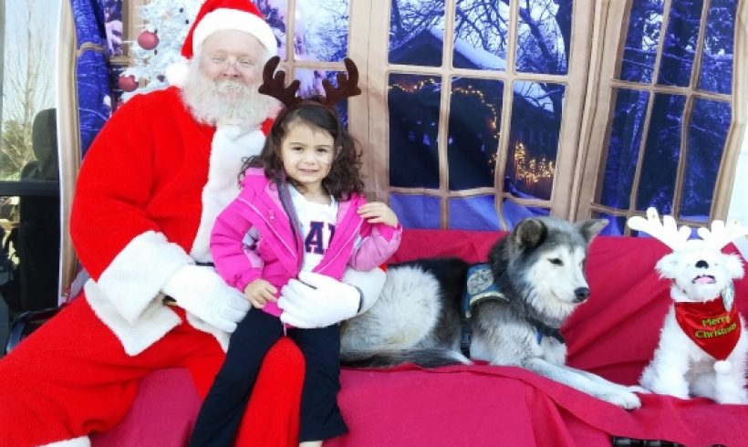 Get your pet's picture taken with Santa at Pet Mania