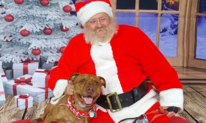 Pet Pictures with Santa – not just for pet's anymore!
